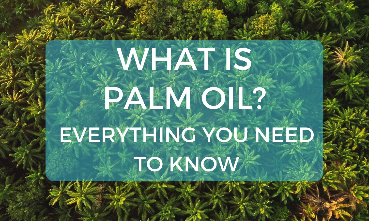 What Is Palm Oil? Everything You Need To Know